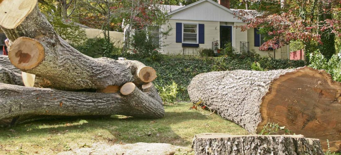 Additional Services That Can Be Completed During Professional Tree Removal in Aurora CO