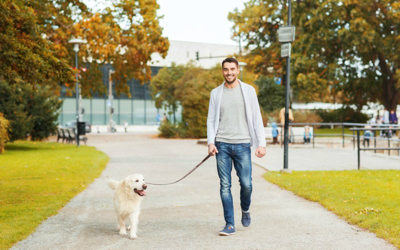 Flexible Dog Walking Services in NYC