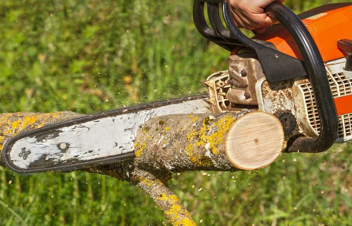 Find Professionals Tree Service in South Bend IN